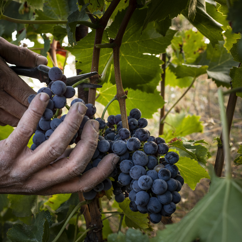 Wines Mas Igneus - masigneus eng