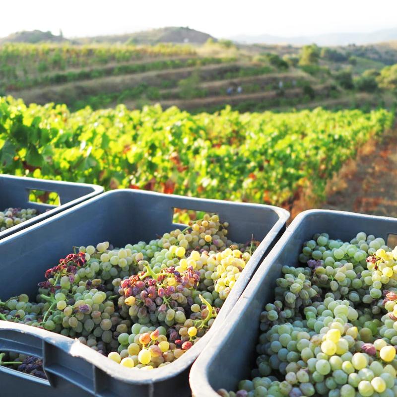 winesmasigneuspriorat-masigneus