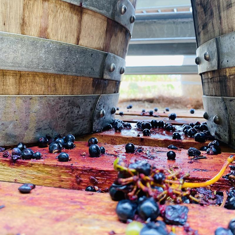 vinsmasigneuspriorat-masigneus