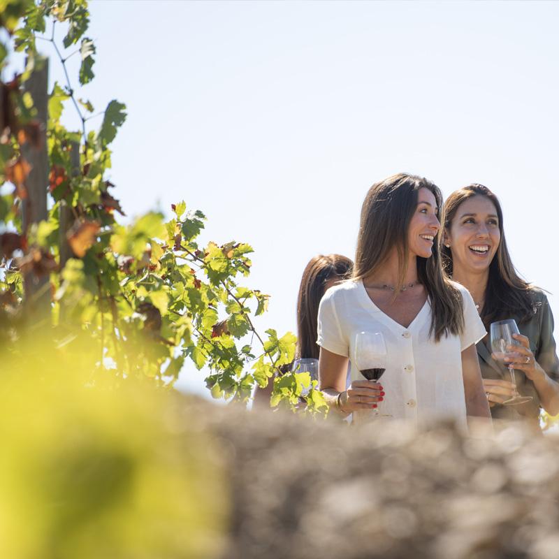 vi ecològic priorat-masigneus